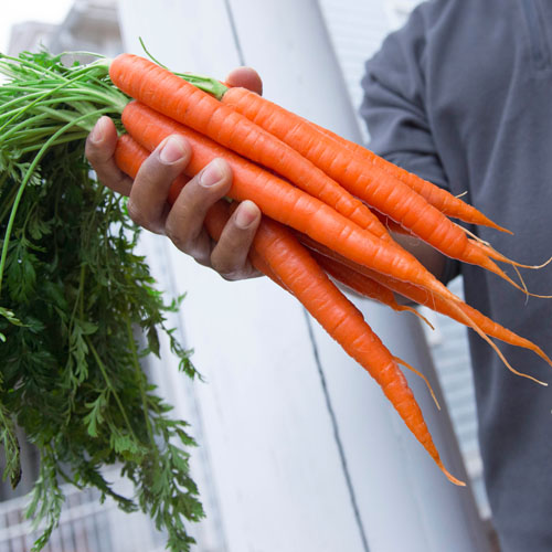 karat_carrots-1