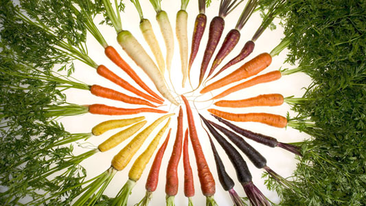 Carrot Color Varieties